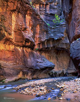 narrow,of,the,virgin,river,zion,national,park,colorado,plateau