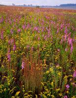 autumn,prairie,illinois,tallgrass