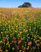Illinois,tallgrass,prairie,wildflowers,fruit