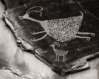 big,horn,sheep,petroglyph,colorado,plateau,anasazi,rock,art