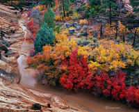 canyon,rainbow,colorado,plateau,autumn,slickrock