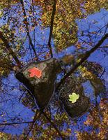 autumn,couple,illinois,mathiessen,state,park