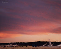 buffalo,sunset,wyoming,yellowstone,national,park