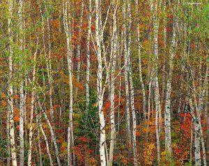 Autumn Transition