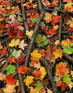 Autumn's Web