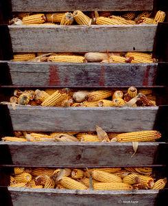 Corn Crib Door