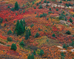 Autumn's Tapestry