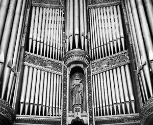 The Organ Guardian