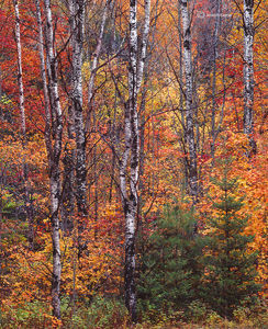 New England Forest