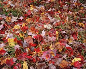 Autumn Discards
