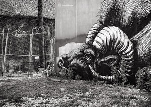 ROA's Big Horn Sheep