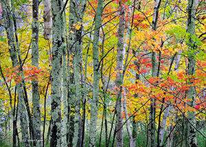 The Autumn Forest