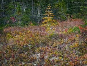 The Autumn Bog
