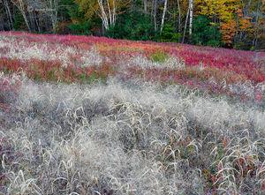 The Grass Blueberry Field