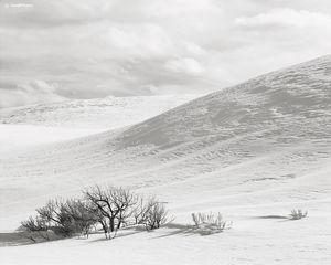 Snow Mounds & Sage Brush