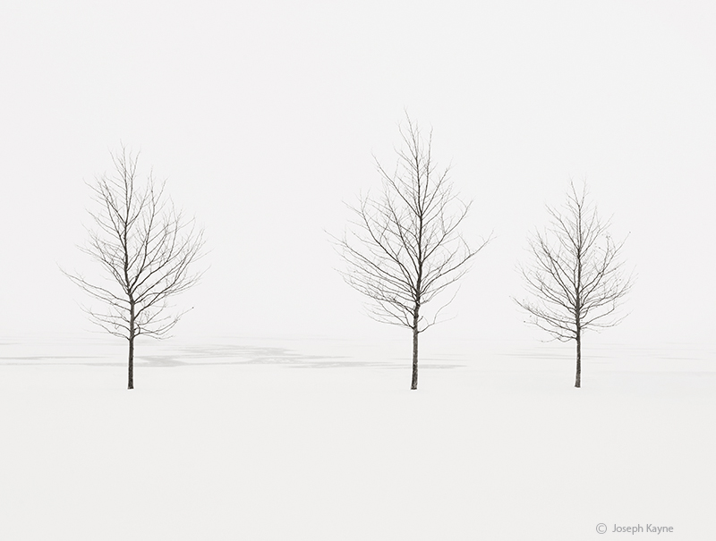 trees,shoreline,frozen,lake,michigan,chicago,polar,vortex