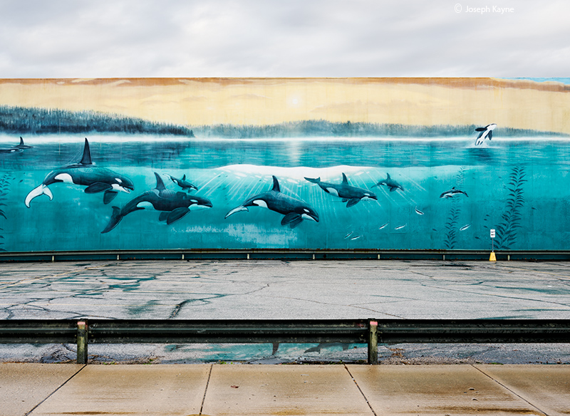concrete,ocean,orca,parking,lot,indiana,wyland