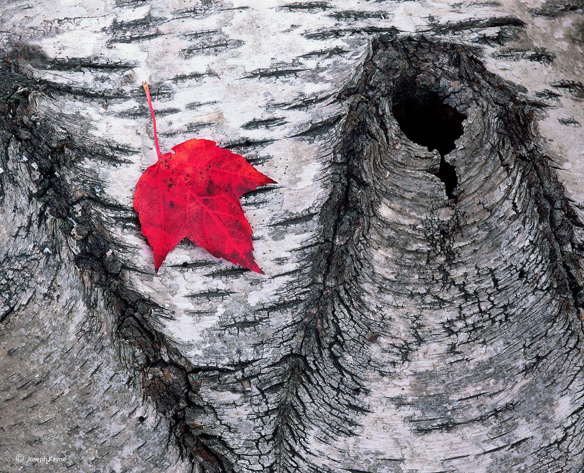 Forest Floor, Autumn