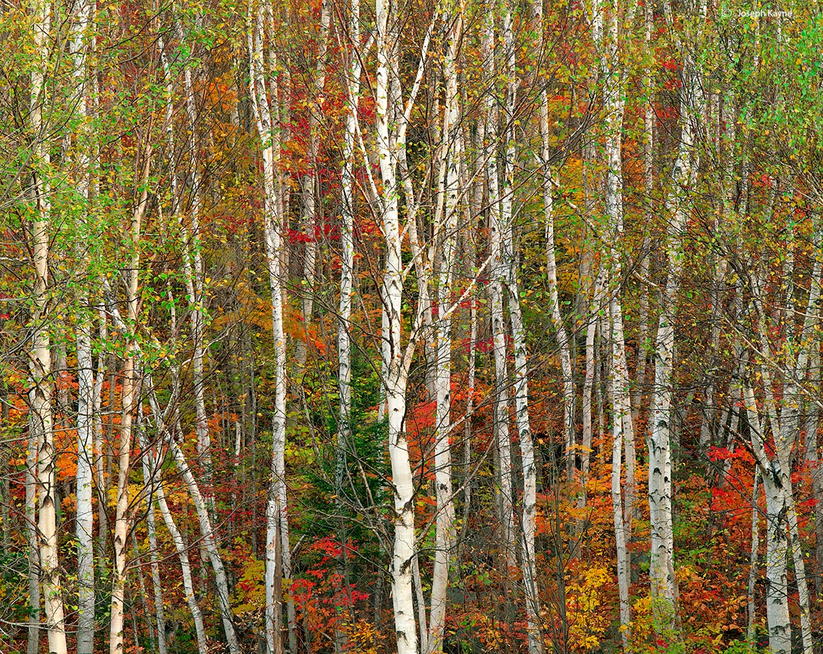 autumn,transition,maine, photo