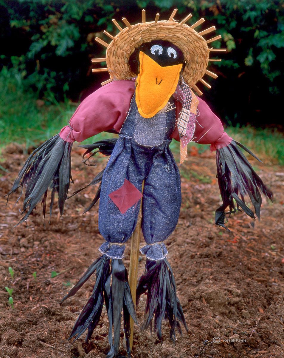 scarecrow,maine, photo