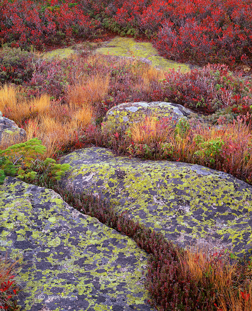 granite,toprock,lichens,maine,autumn, photo