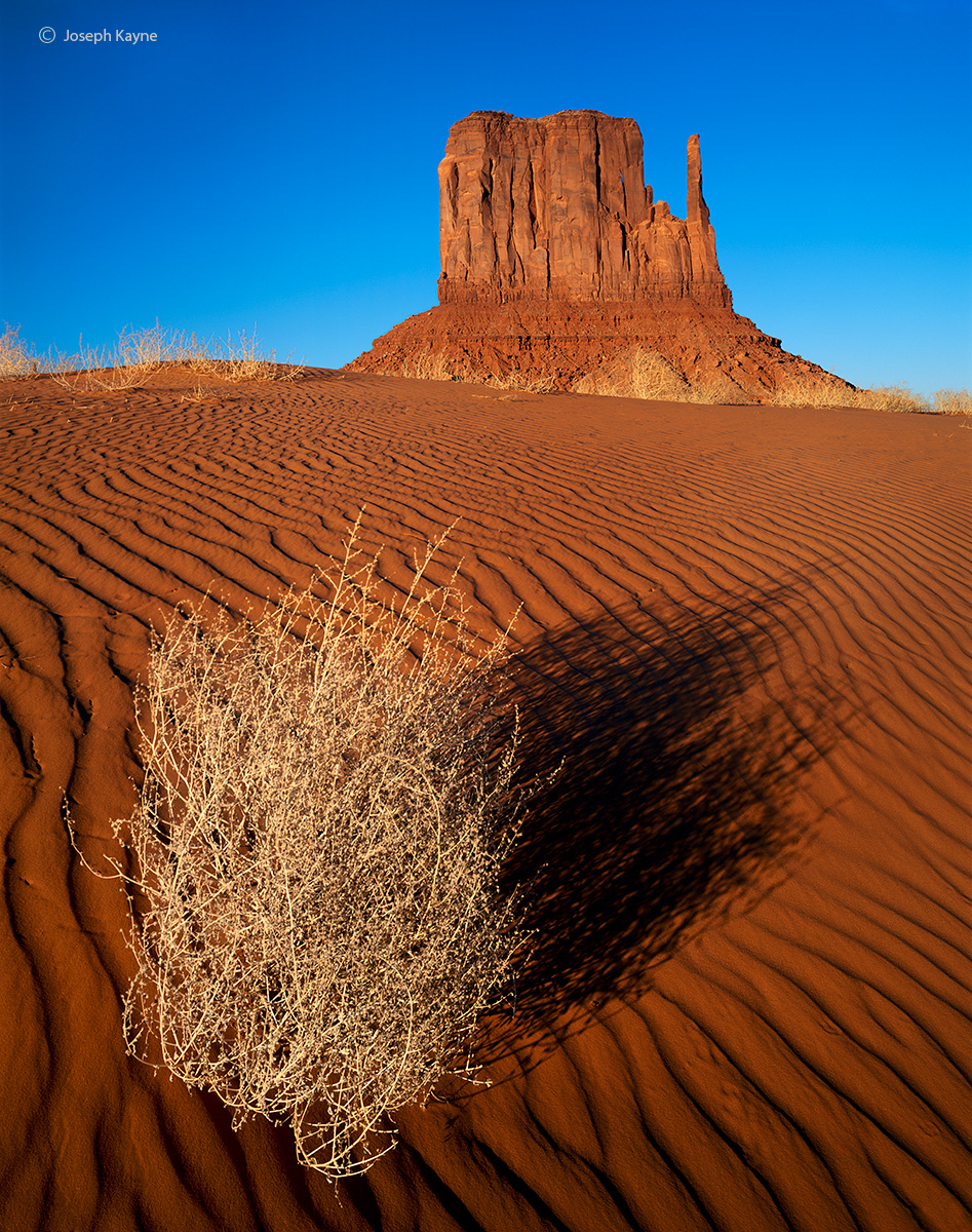 symbiotic,relationship,navajoland,navajo,sacred,lands, photo