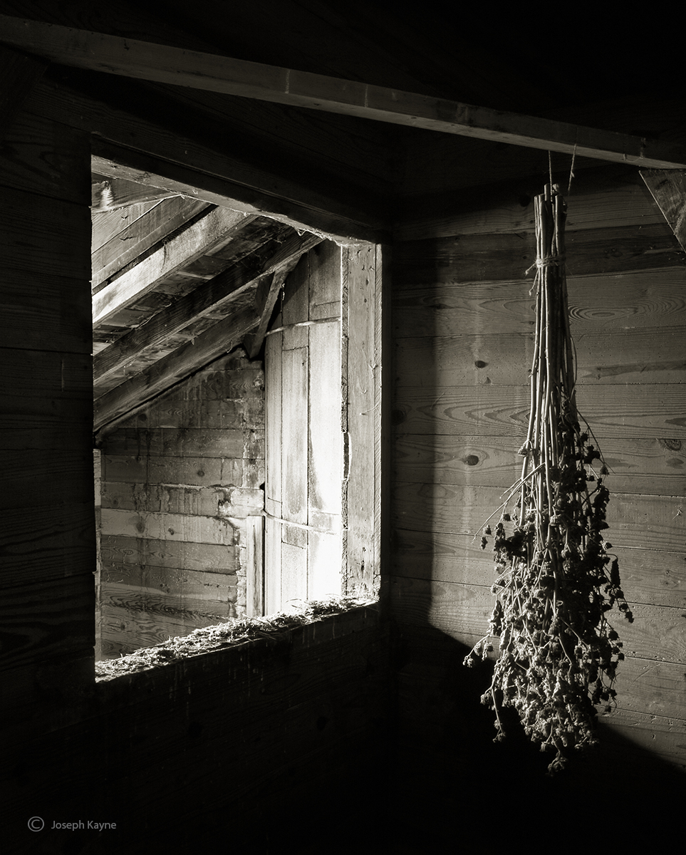 drying,seedheads,illinois,barn,interior, photo