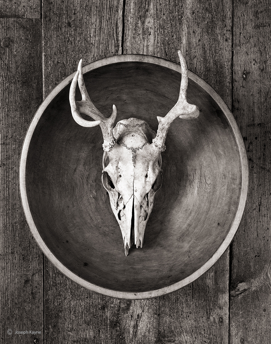 skull,bowl,new,mexico,georgia,okeeffe, photo