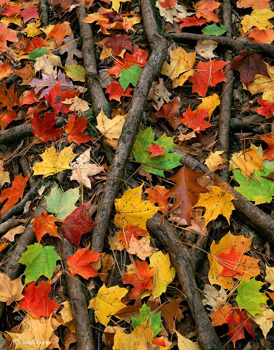 Autumn, Illinois