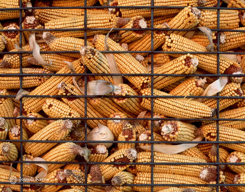 fruits,of,the,earth,indiana,corn,crib, photo
