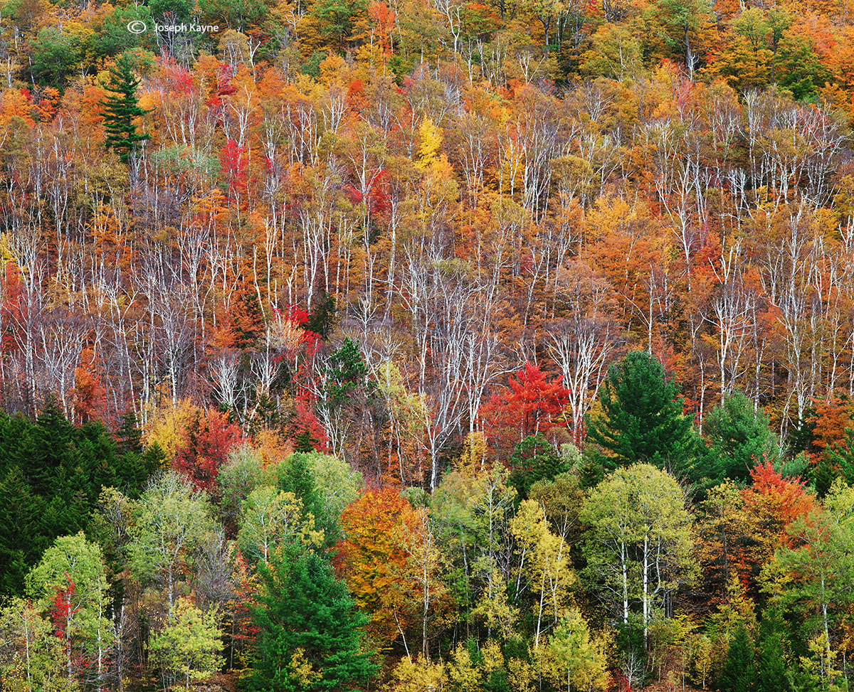 autumn,hillside,vermont,new,england, photo