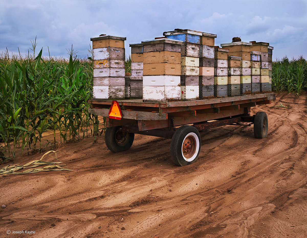 beekeeper,field,indiana,farm, photo