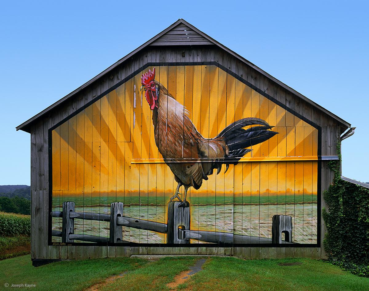 rooster,barn,pennsylvania,art, photo