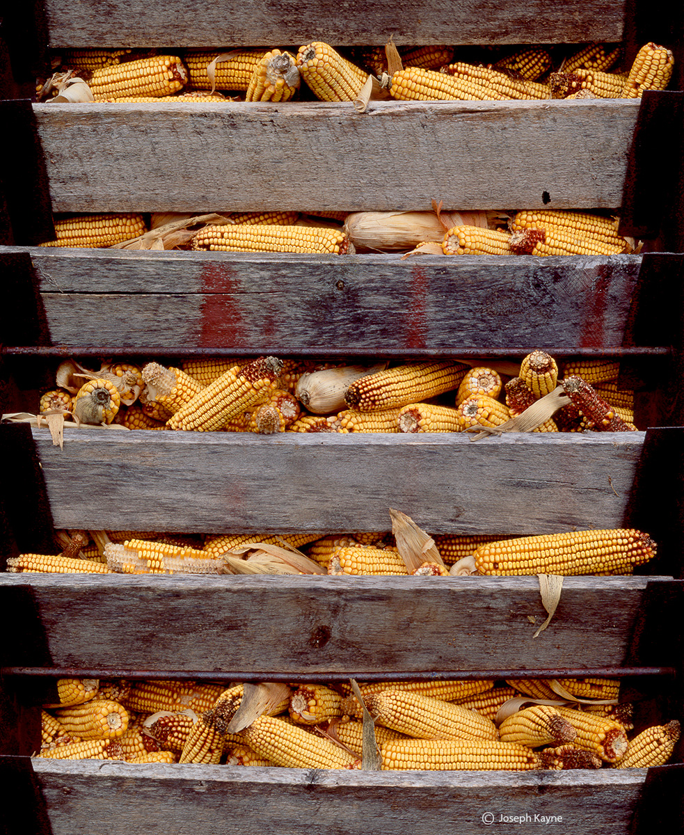 corn,crib,door,indiana,harvest,corn, photo