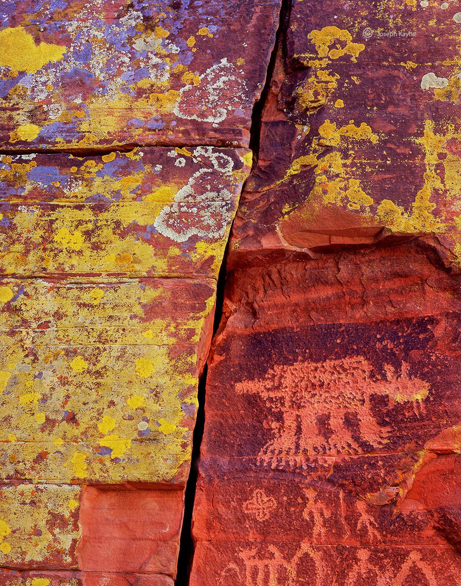 ancient,bobcat,southwest, photo