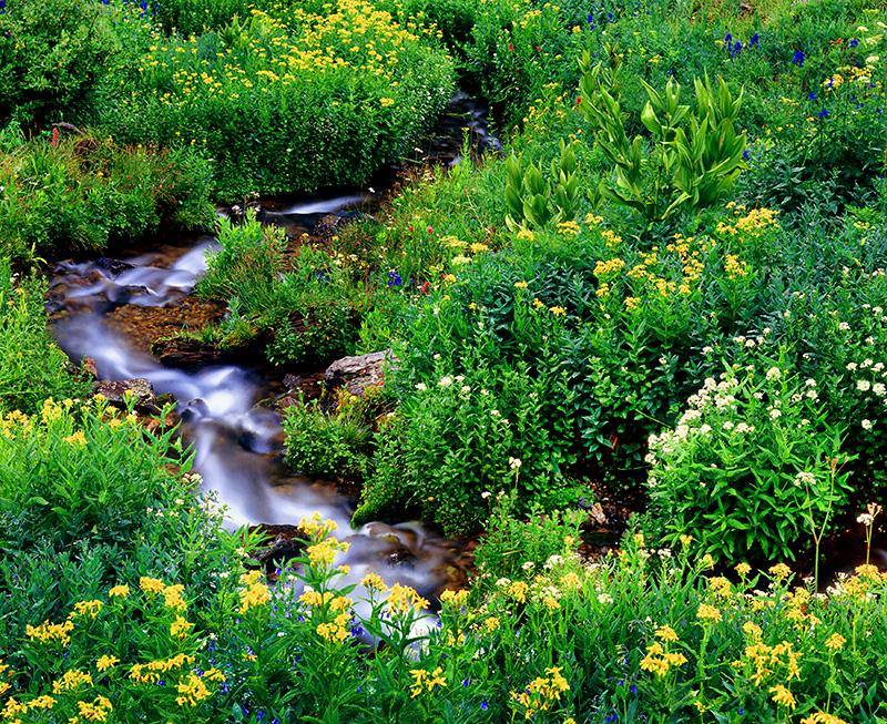 high,alpine,rocky,mountain,wildflowers,stream,flat,tops,wilderness,colorado, photo
