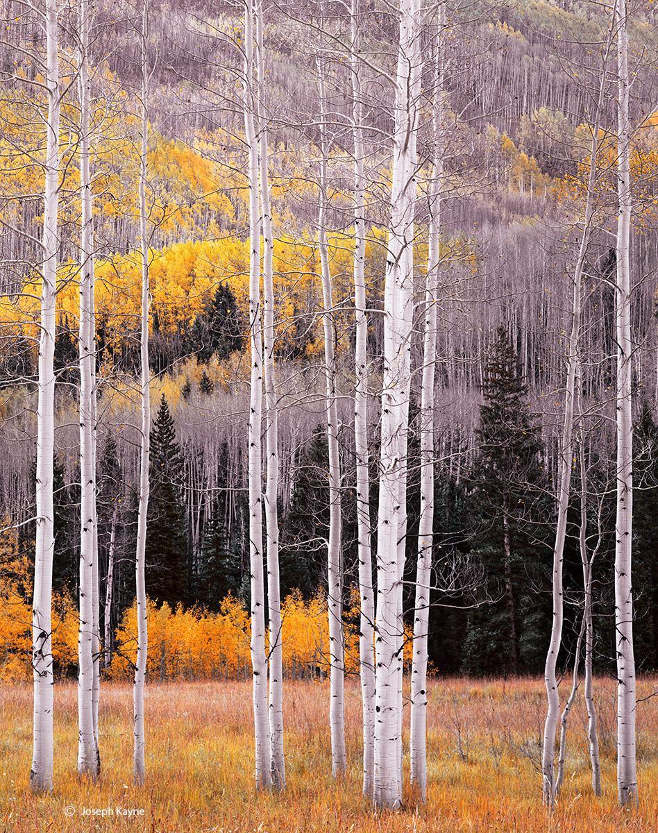 autumn,last,stand,colorado, photo