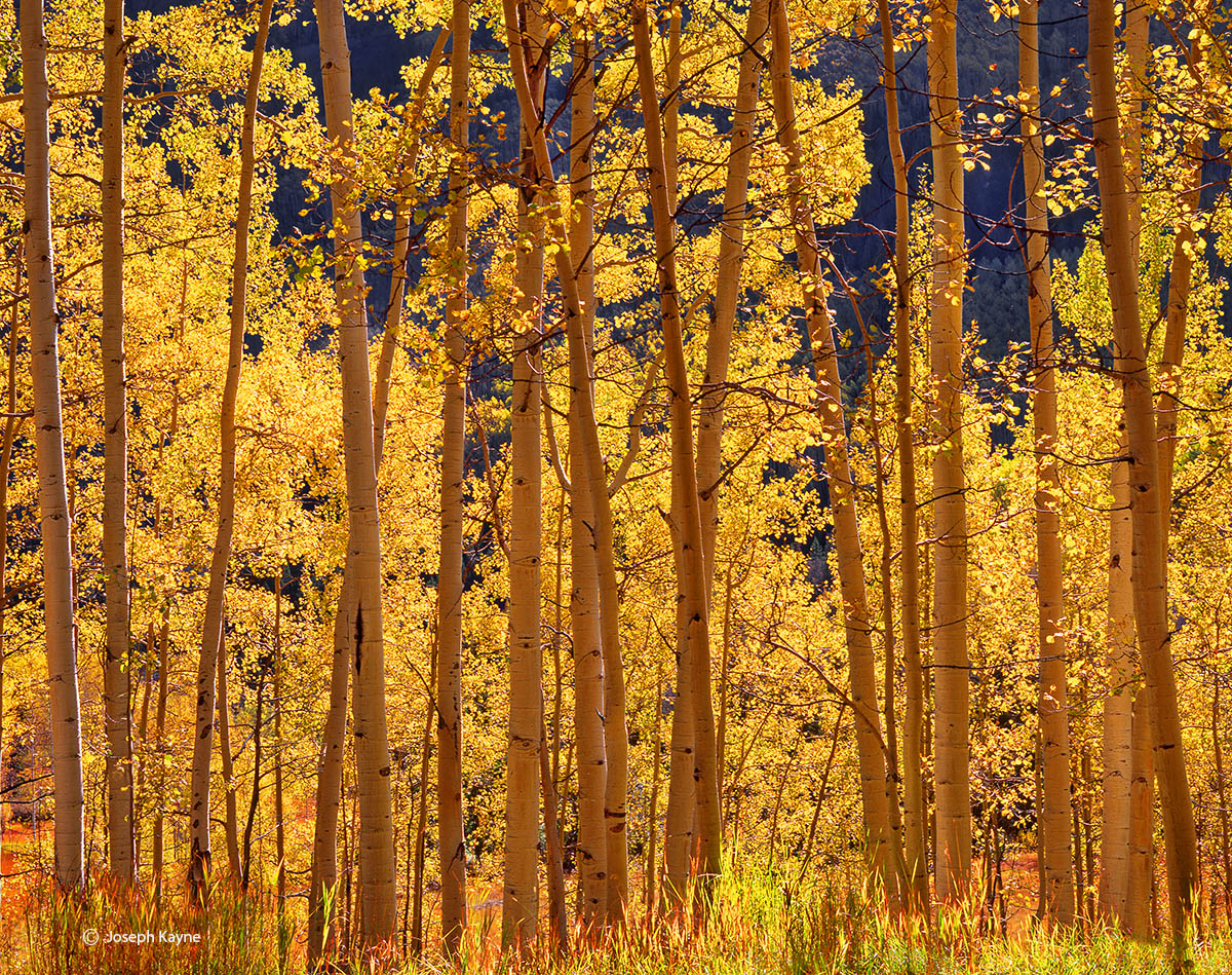radiant,aspen,colorado,autumn, photo