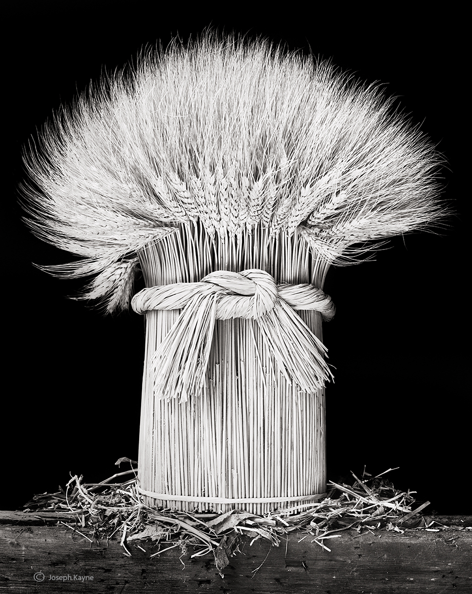 sheaf,wheat,illinois,farmhouse, photo