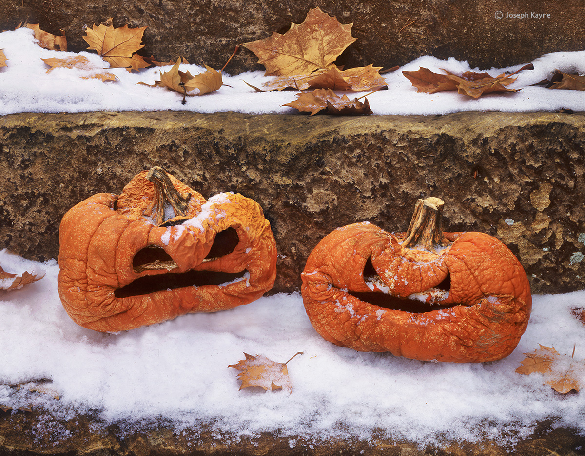 wise,guys,ohio,frozen,pumpkins, photo