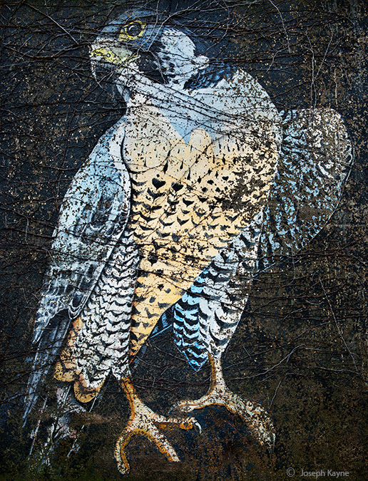 peregrine, falcon, chicago, photo, art, color, large, format, view, camera, mural, street, graffiti, urban, painting, viaduct...