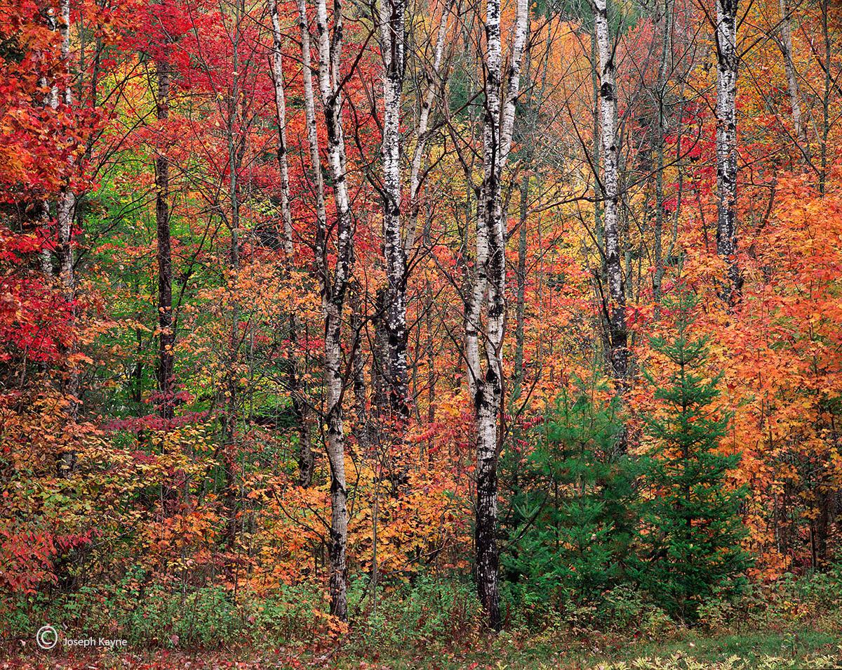 white,mountains,autumn,new,hampshire, photo