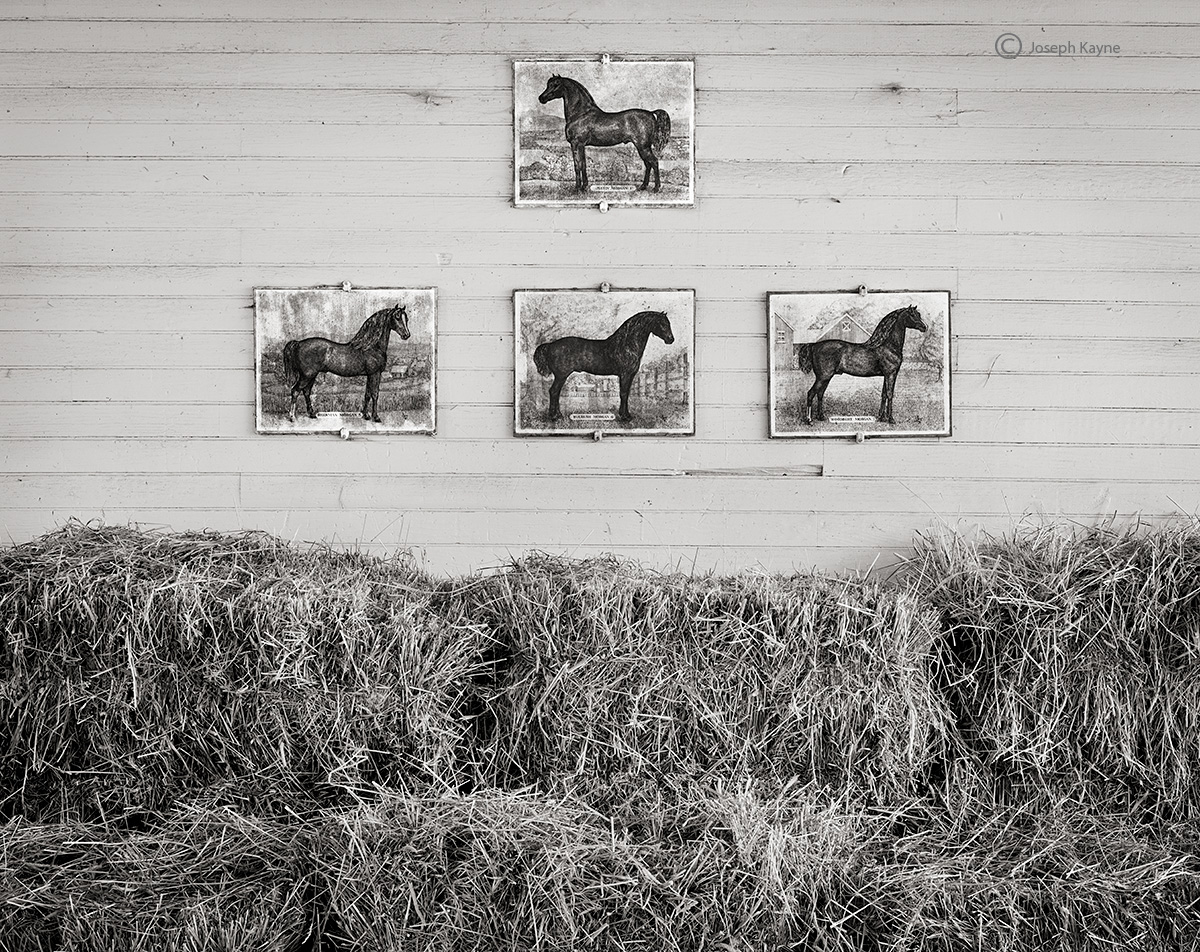vermont,horse,barn,new,england, photo