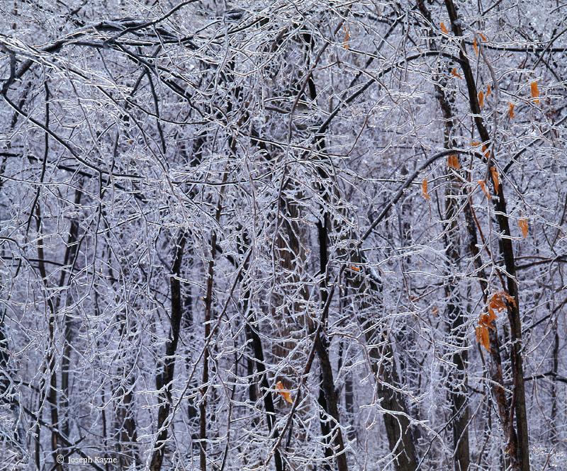 Ryerson Woods Ice Storm
