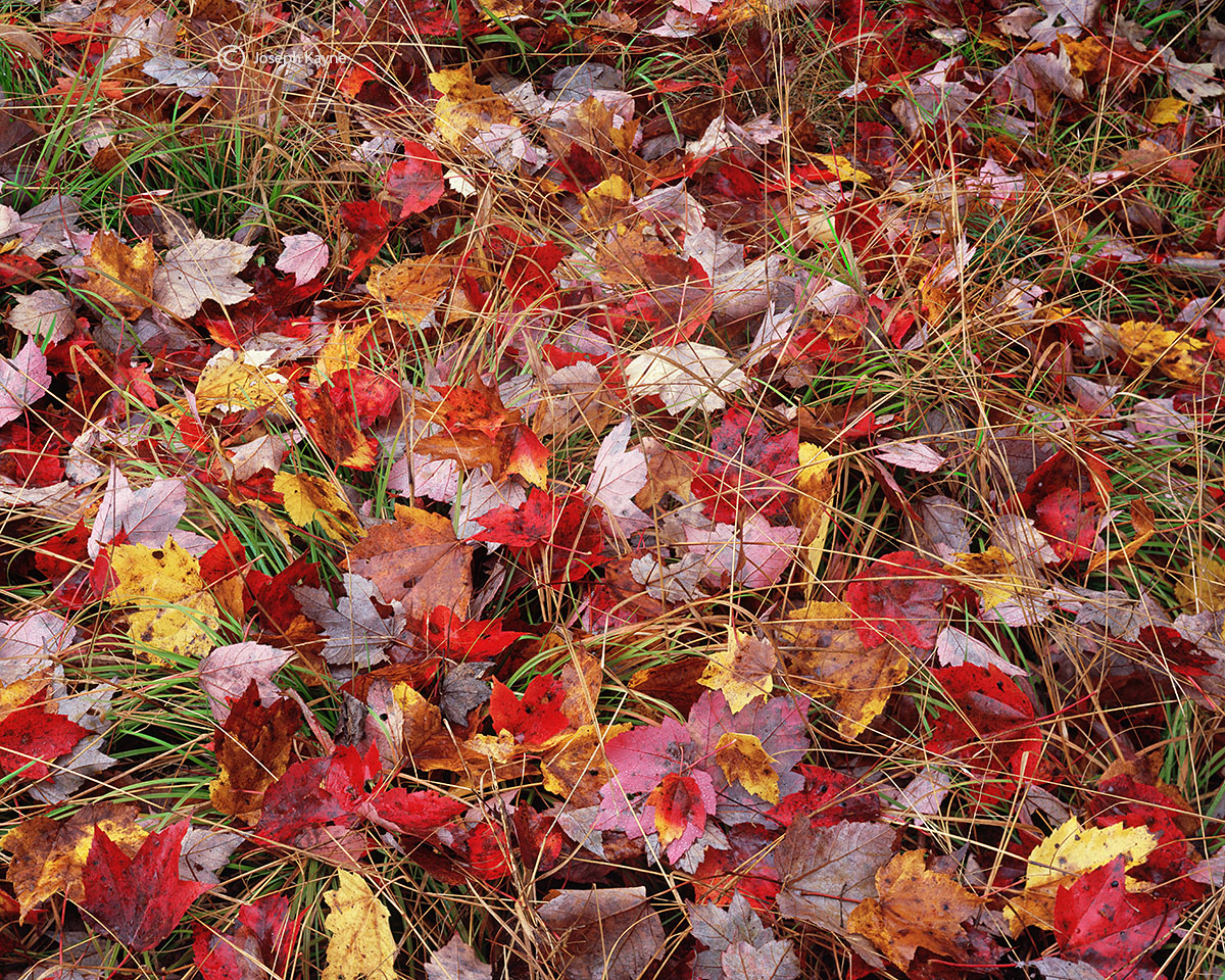 autumn,discards,new,hampshire, photo