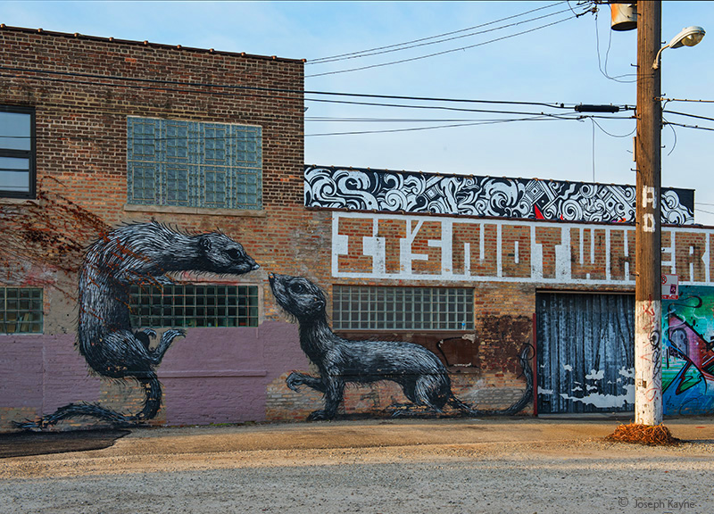 weasals,by,roa,chicago, photo