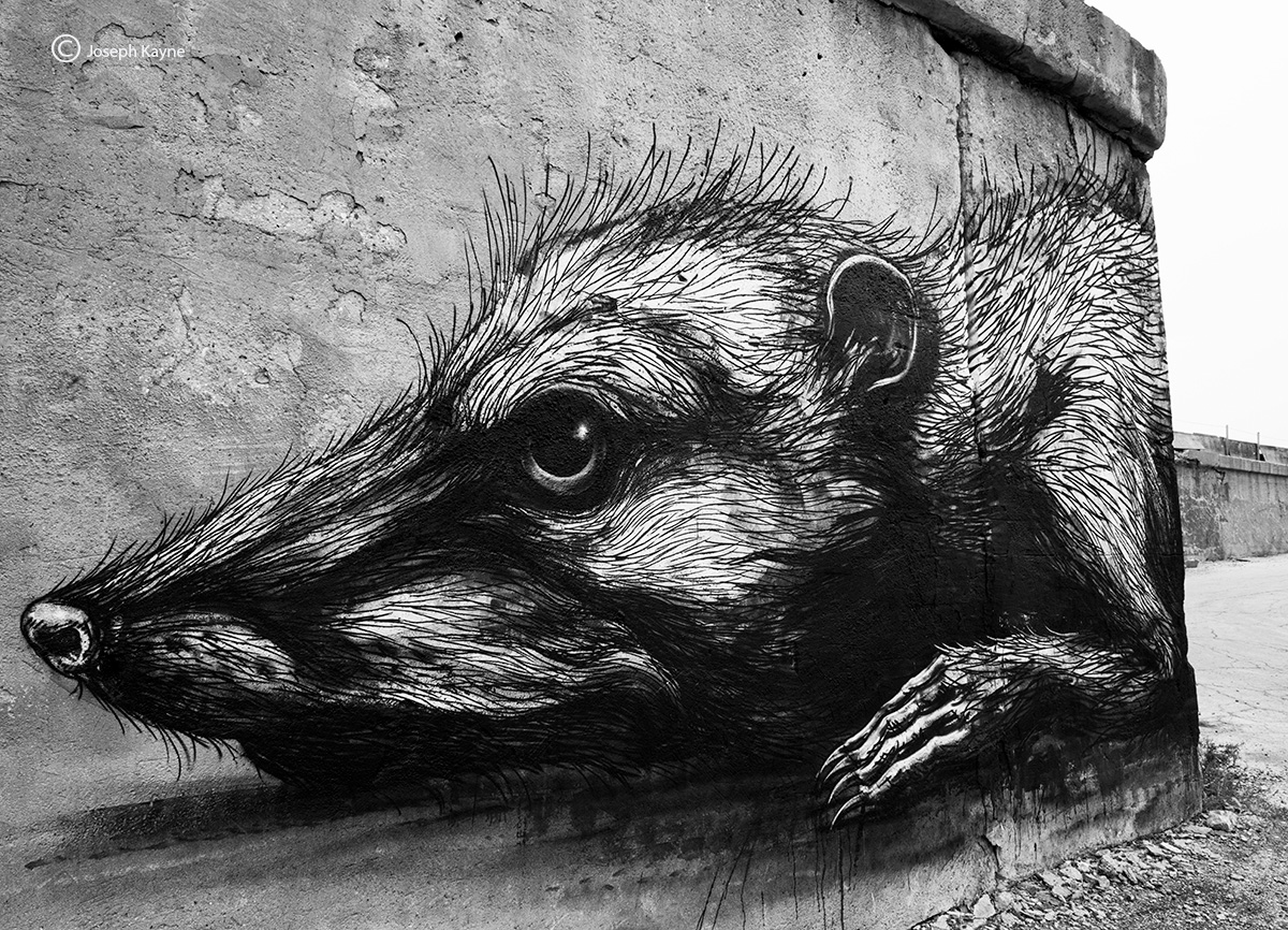 ROA,street,art,possum,chicago, photo