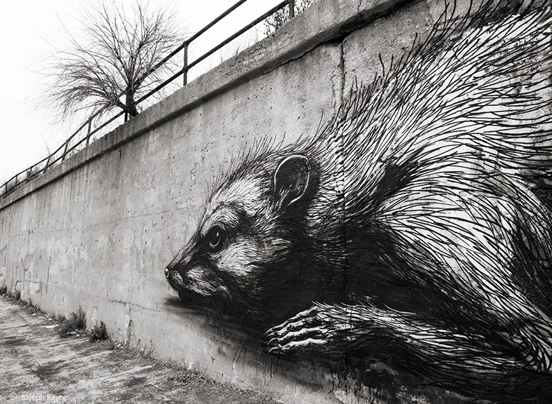 the,rodent,chicago, photo