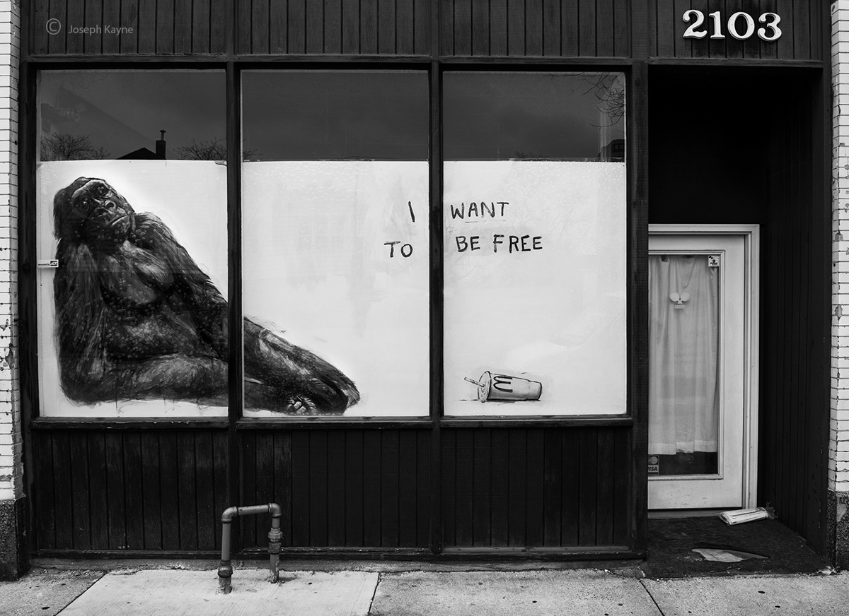 i,want,to,be,free,chicago,street,art, photo