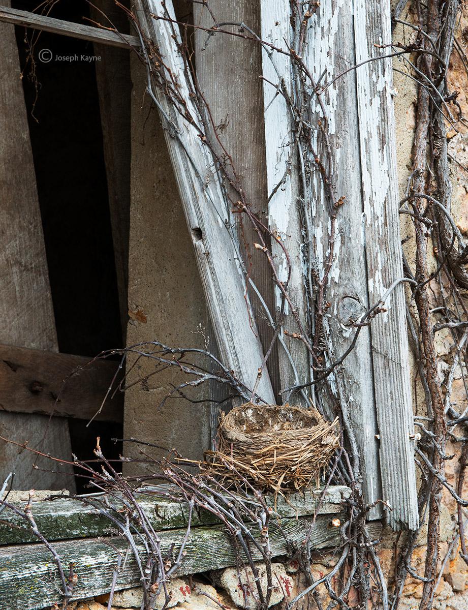 the,bird,nest,illinois, photo